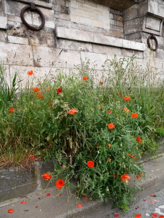 Poppies by the Seine