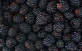 black ber