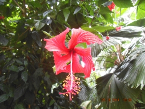 more generic flowers - this one's from the rainforest zone!