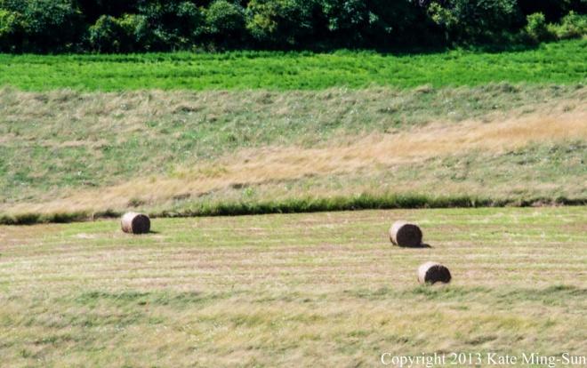 20130803 - hay bales