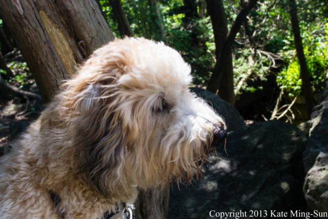 20130803 - Wheaten hiker