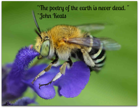 Bee-earth-quote